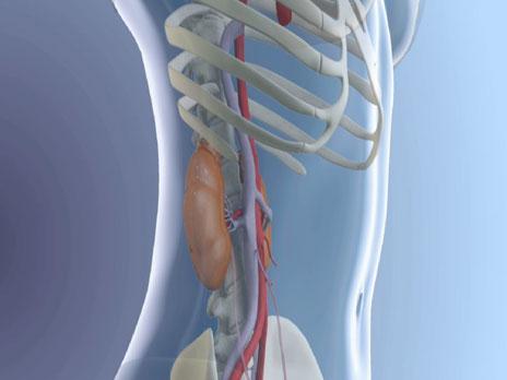 Details: Die Niere - und ein Leben mit der Maschine · focus-multimedia
